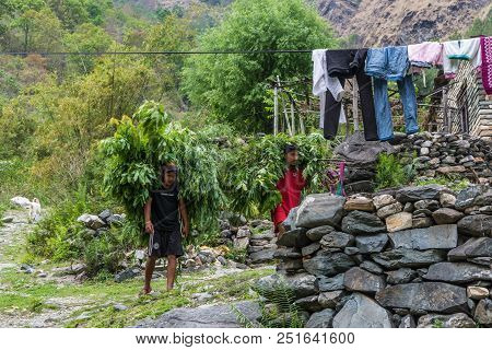 Tatopani, Nepal-09.04.2018: Two Young People Carry Large Bundles Of Green Branches On April 9, 2018,