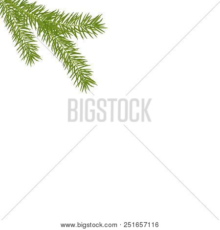 Christmas Tree Branches In The Corner. Green Fir Tree Branch. Realistic Vector Christmas Pine Tree B