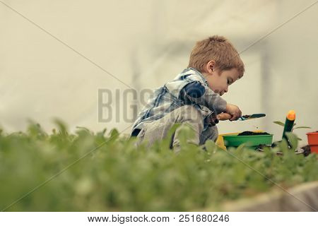 Small Boy In Greenhouse. Greenhouse Worker. Small Boy Work In Greenhouse. Modern Greenhouse Gardenin