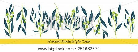 Eucalyptus Vector. Decorative Vector Leaves And Branches. Elegant Foliage. Beautiful Floral Element