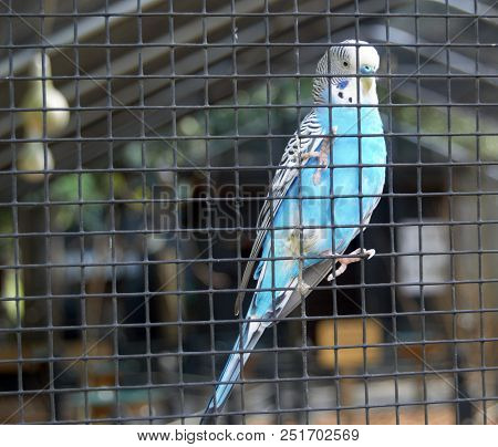 One Small Blue Bird Behind Wire Cage
