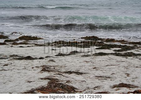 Gentle Waves Of Teal And White Foam Roll Onto The Sandy Shore  Dotted With Piles Of Brown Seaweed At
