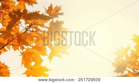 Yellow Maple Leaves On The Background Of Sunny Autumn Sky. Autumn Foliage Background. Copy Space