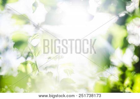 Green Blurred  Background. Natural Green Background