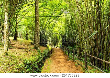 The Nature Of The Bamboo On The Side Of The Si Dit Waterfall , Phetchabun In Thailand.