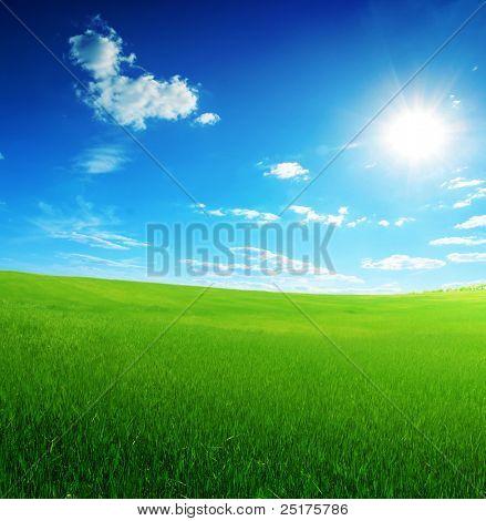 field of green grass and sun blue sky