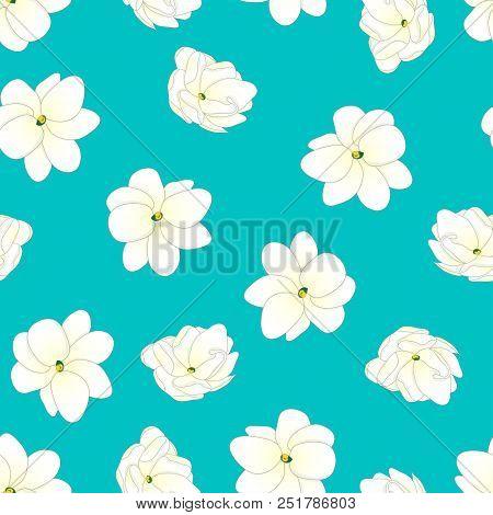 Jasminum Sambac - Arabian Jasmine On Blue Teal Background. Vector Illustration.
