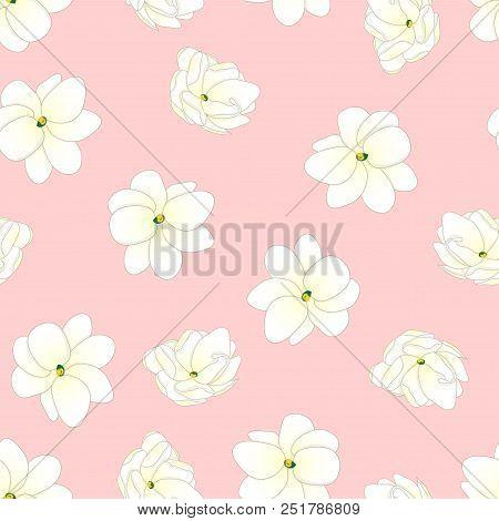 Jasminum Sambac - Arabian Jasmine On Light Pink Background. Vector Illustration.