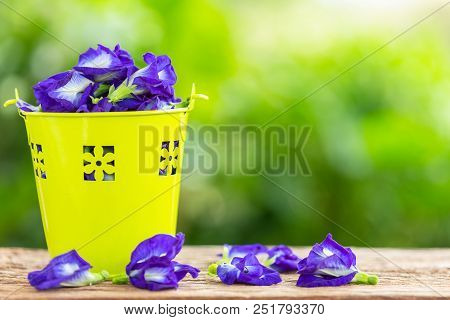 Fresh Purple Butterfly Pea Flower On Wooden Table Background