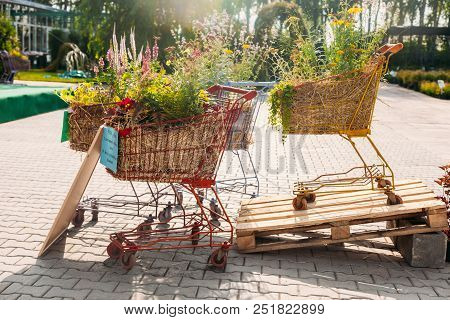 Two Shopcarts With Flowers Outdoor At Summer