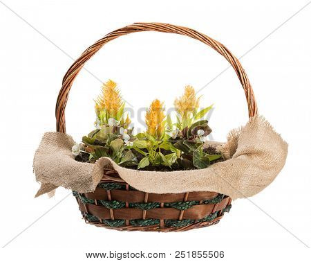 Colorful flowers in basket isolated on white background.