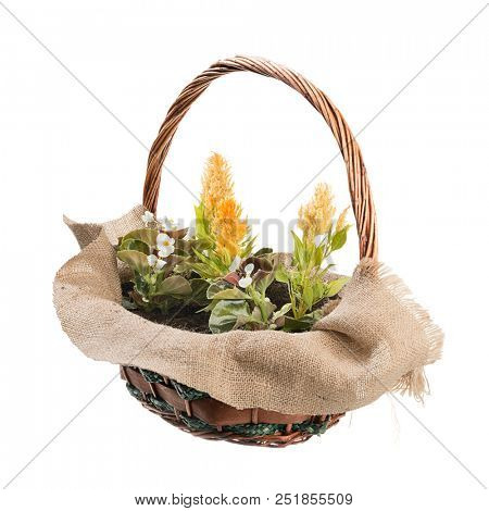 Potted Flowers Isolated