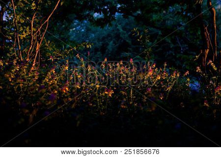 fairy tale forest at sunset with wild flowers and trees