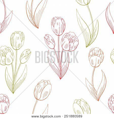Tulip Flower Graphic Color Sketch Seamless Pattern Background Illustration Vector