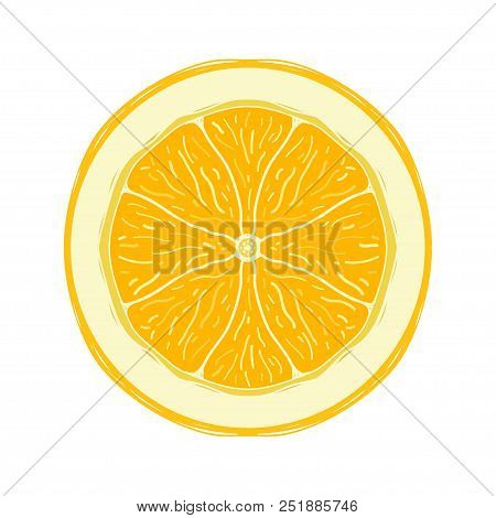 Sliced Colored Sketch Style Fruit Lemon Isolated On White Background. Half Of Fruit. Bio Food Vector