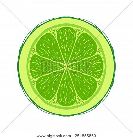 Sliced Colored Sketch Style Fruit Lime Isolated On White Background. Half Of Fruit. Bio Food Vector