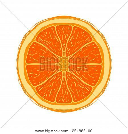 Sliced Colored Sketch Style Fruit Orange Isolated On White Background. Half Of Fruit. Bio Food Vecto