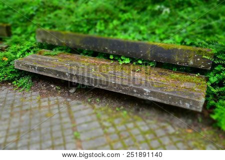 Weathered Wooden Bench In Focus With Moss And Ivy Overgrown, Abstract Idyllically Bench Made Of Wood