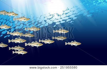 Codfish Background. Cod Atlantic, Vector Illustration With Details And Optimized Specks To Be Used I