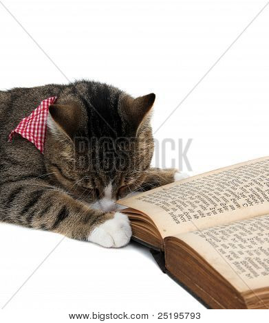 Nice Kitty With Bandana Beside An Old Book