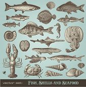 vector set: fish, shells and seafood - variety of detailed vintage illustrations poster