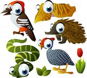 2010 animal set: woodpecker, echidna, cuttlefish, helmeted fowl, snake poster