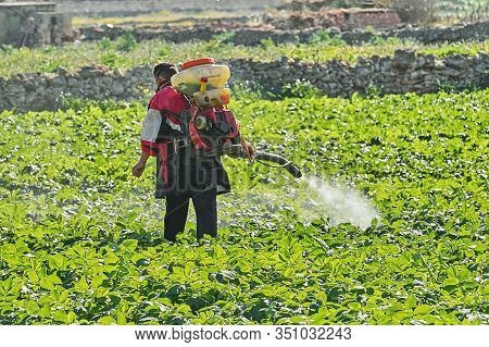 Farmer With Manual Electric Fogger Machine Spraying Pesticides And Herbicides In Potato Field. Harve