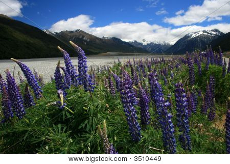 South Island Spring Flowers
