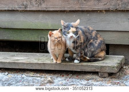 Multi-colored Cat Mom With A Red Kitten Together. Animals Are Sitting On A Wooden Floor. Winter Is C