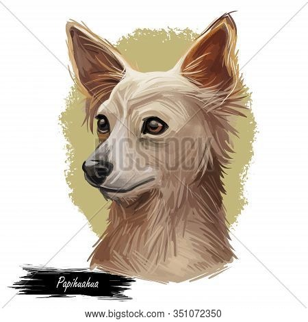 Chion, Papihuahua, Pap-chi, Chi-a-pap Dog Cross Breed Of Papillon And Chihuahua Puppy Digital Art Il