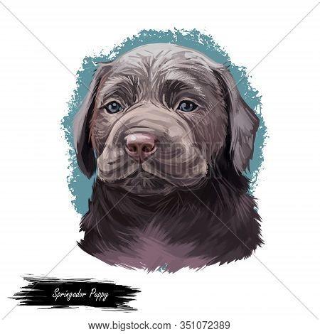 Springador Digital Art Illustration Of Cute Dog Muzzle Isolated On White. Cross Breed Dog Of Springe