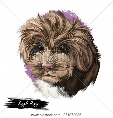 Sproodle Digital Art Illustration Of Cute Dog Muzzle Isolated On White. Crossbreed Of Poodle And Eng