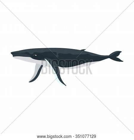 Whale Humpback Vector Icon.cartoon Vector Icon Isolated On White Background Whale Humpback .