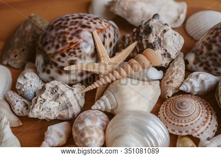 Macro View Of Seashells And Starfish Background. Many Different Seashells Piled Together. Ocean Life