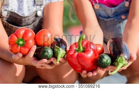 Healthy Lifestyle. Farmers Hold Peppers Eggplants And Cucumbers. Farmer Presenting Organic Homegrown