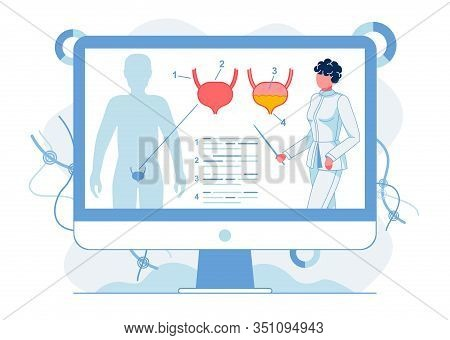 Studying Human Bladder Anatomy Flat Illustration. Doctor Showing Educational Presentation With Male