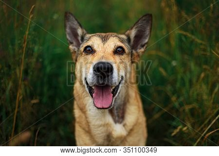 Cute Mongrel Dog Standing On Green Grass