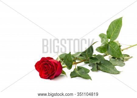 Beautiful Single Red Rose Flower Isolated On White Background. Red Rose Is A Wonderful Flower To Exp
