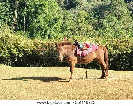 Brown Pony With Colorful Saddle Stand On Grass Field With Tree Background Under Sun Light