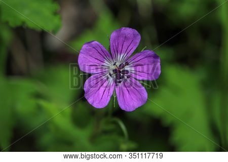 Valley Of Flowers His Is A Picturesque National Park, Gracing The Beauty Of Western Himalayas.  Vall