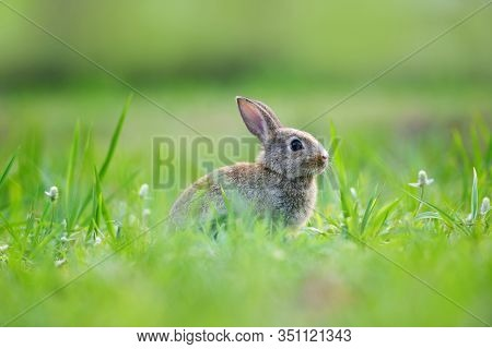 Easter Bunny With Brown Rabbit On Meadow And Spring Green Grass Background Outdoor Decorated For Fes