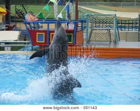 The Dancing Dolphin
