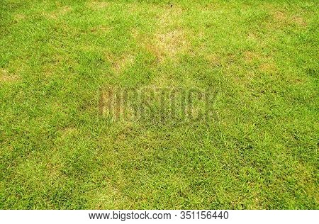 Pests And Disease Cause Amount Of Damage To Green Lawns, Lawn In Bad Condition And Need Maintaining,