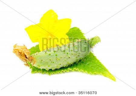 Little Green Cucumber With Leaf And Flower