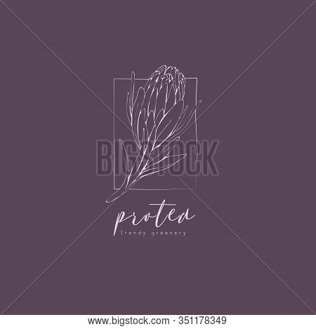 Protea Logo And Flowers. Hand Drawn Wedding Herb, Plant And Monogram With Elegant Leaves For Invitat