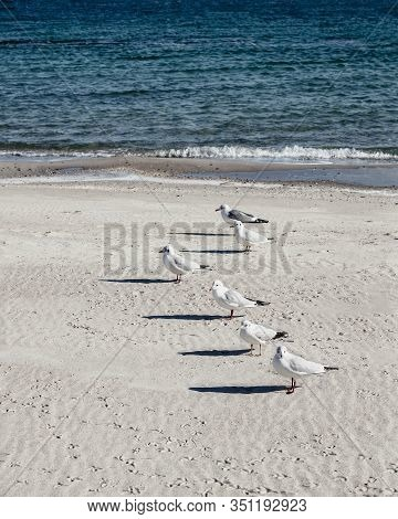 Seagulls On The Beach Of The Black Sea. Selective Focus.