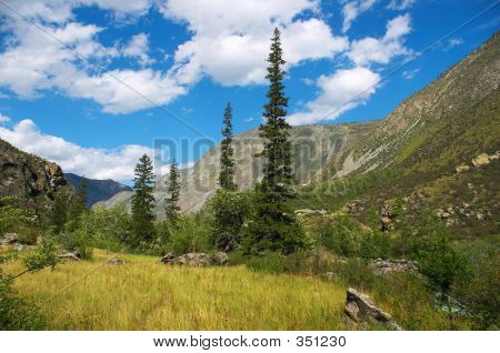 Green Firs And Blue Skies-02