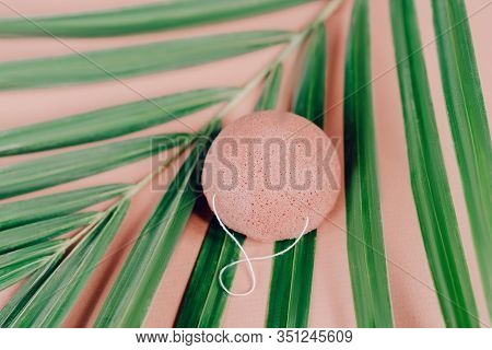 Natural, Organic And Biodegradable Konjac Sponge. Overhead Shot On A Pink Background With Palm Leaf
