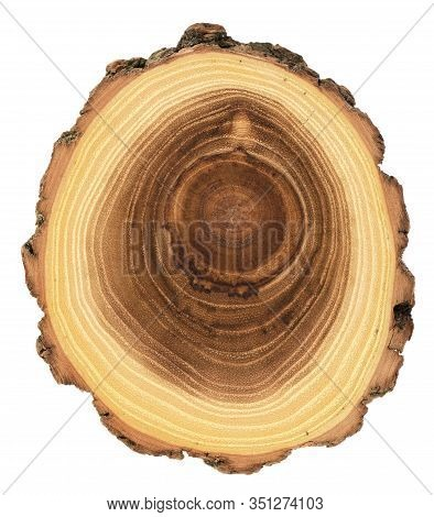 Acacia Tree Cross Section With Growth Rings And Bark Isolated On White Background Overhead View