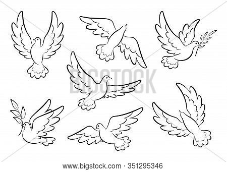 Flying Dove Sketch Vector Set. Pigeons Set Peace And Love Symbols. Dove With Olive Branch Christian